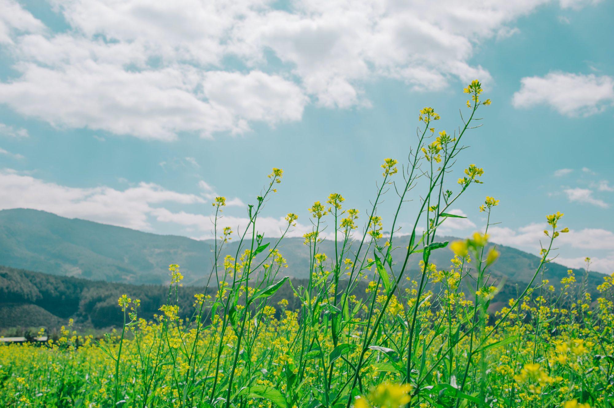 草原に咲く花